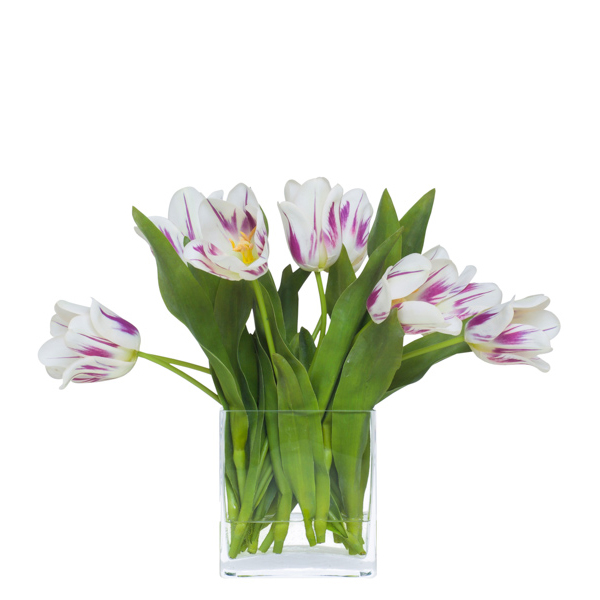 Open Variegrated Fuchsia/White Tulips Waterlike