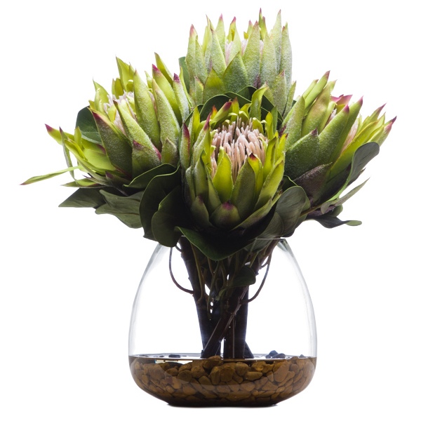 King Protea Waterlike