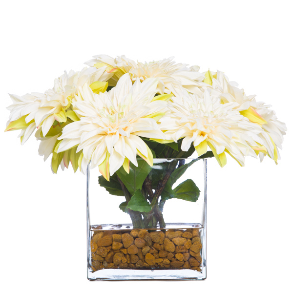 White Dahlia Waterlike