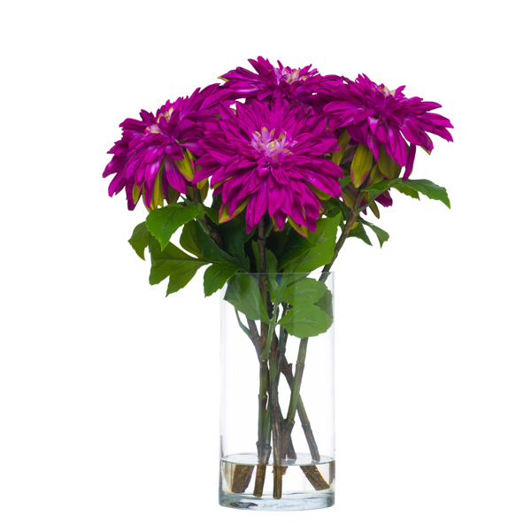 Fuchsia Dahlias Waterlike