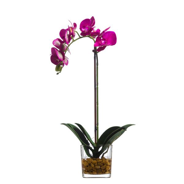 Fuchsia Phalaenopsis Waterlike