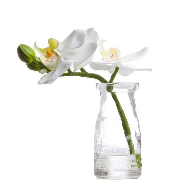 White Mini Phalaenopsis in Milk Bottle Waterlike
