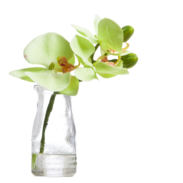 Green Mini Phalaenopsis in Milk Bottle Waterlike