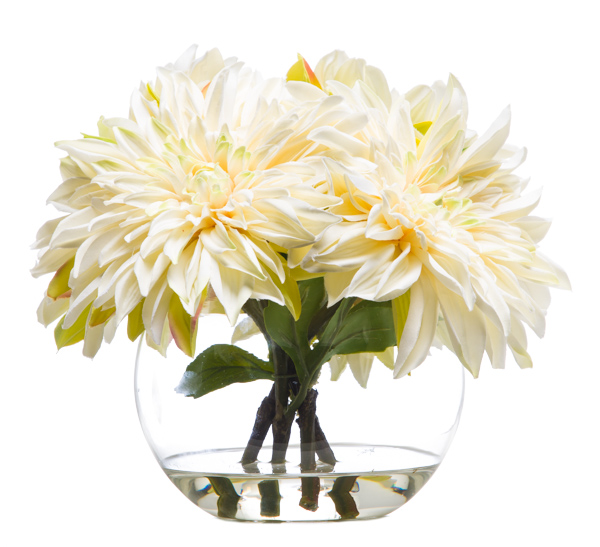 Dahlia Waterlike White