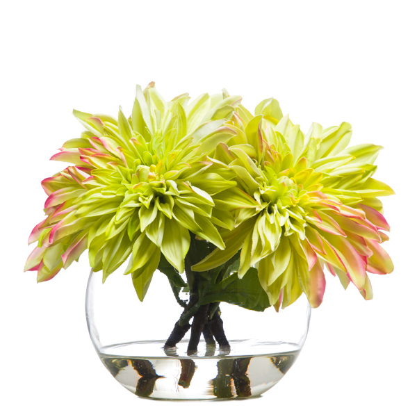 Dahlia Waterlike Green