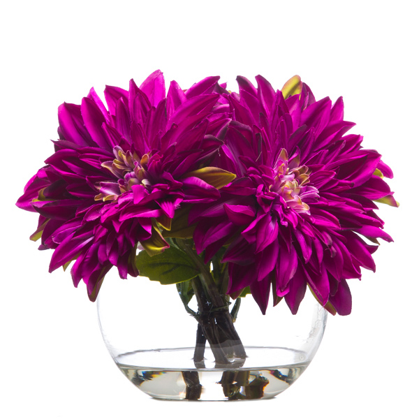 Dahlia Waterlike Fuchsia