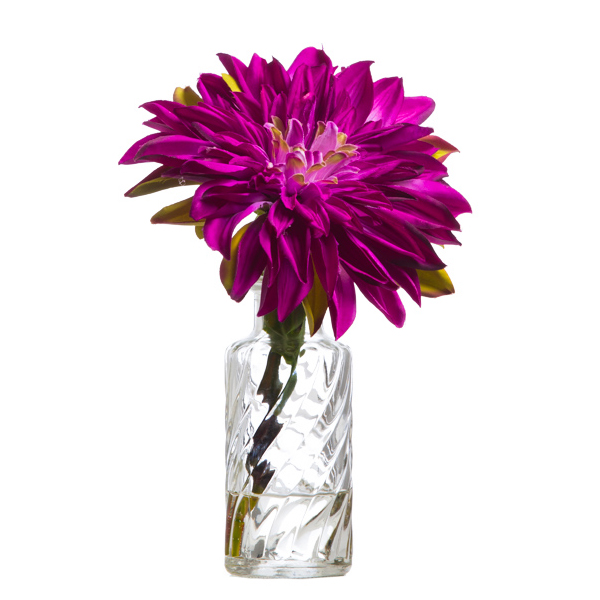 Fuchsia Single Dahlia Waterlike