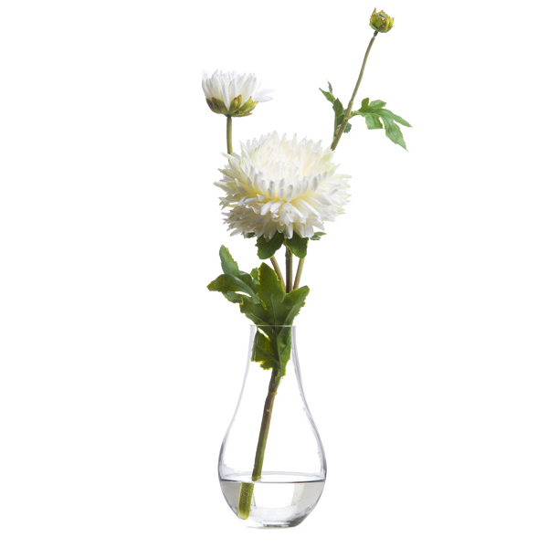 White Single Ruffled Zinnia Waterlike