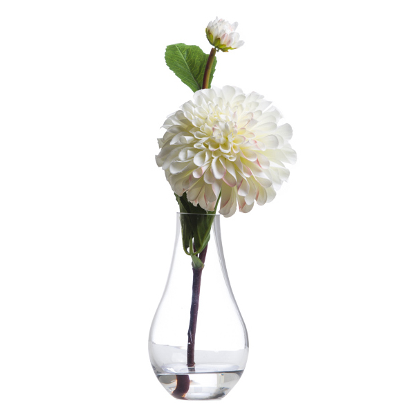 White Single Zinnia Waterlike
