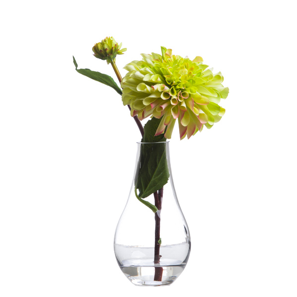 Green Single Zinnia Waterlike