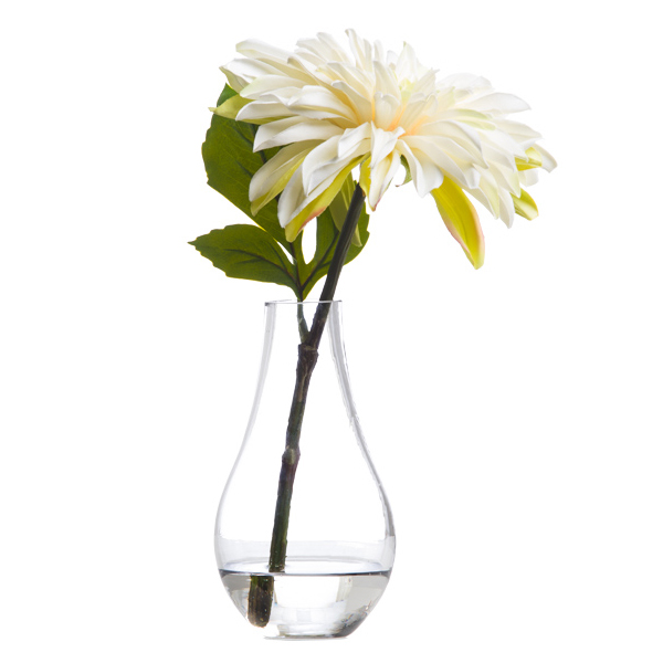 White Single Dahlia Waterlike