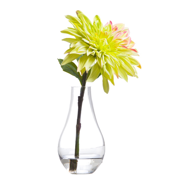 Green Single Dahlia Waterlike