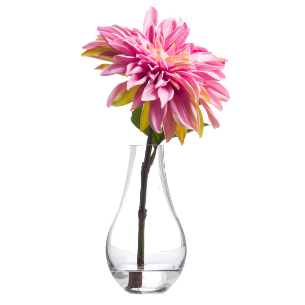 Pink Single Dahlia Waterlike