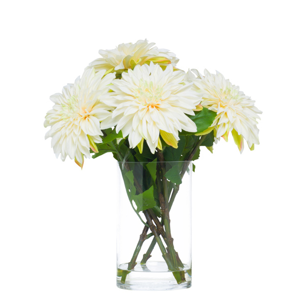 White Dahlias Waterlike