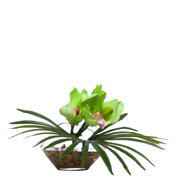 Green Cymbidium/Fan Palm Waterlike