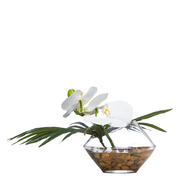 White Phalaenopsis/Fan Palm Waterlike