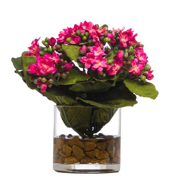 Kalanchoe Waterlike Pink