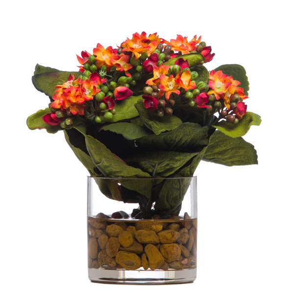 Kalanchoe Waterlike Orange