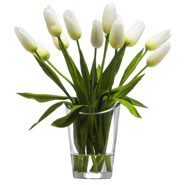 White Bud Tulips Waterlike