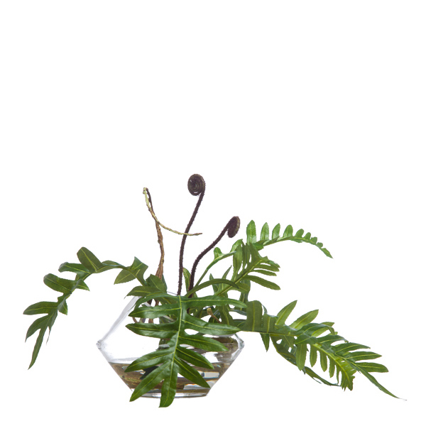 Fern in Cut Angle Bowl Waterlike