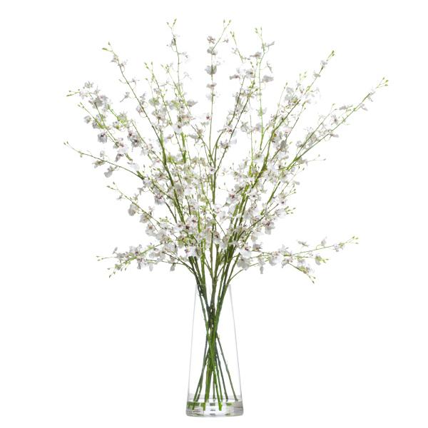 White Oncidium Waterlike