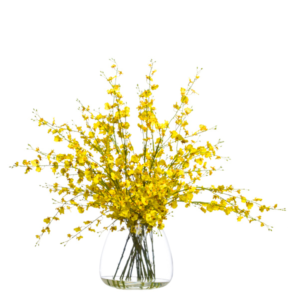 Yellow Oncidium Waterlike