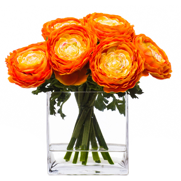Orange Ranunculus Waterlike
