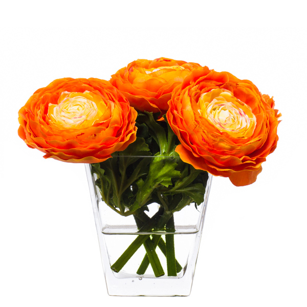 Orange Ranunculus Flare Waterlike