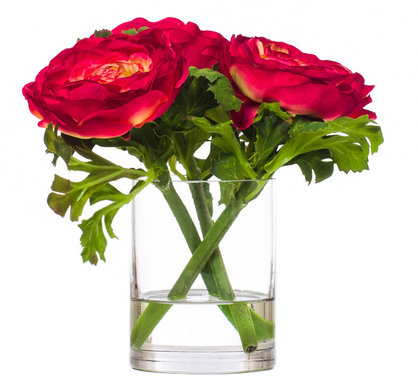 Red Ranunculus Waterlike