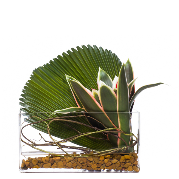 Bromeliad/Fan Palm in Low Rectangle Waterlike