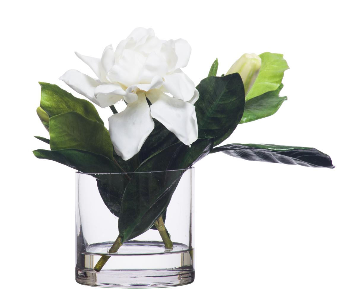 White Gardenia in 3