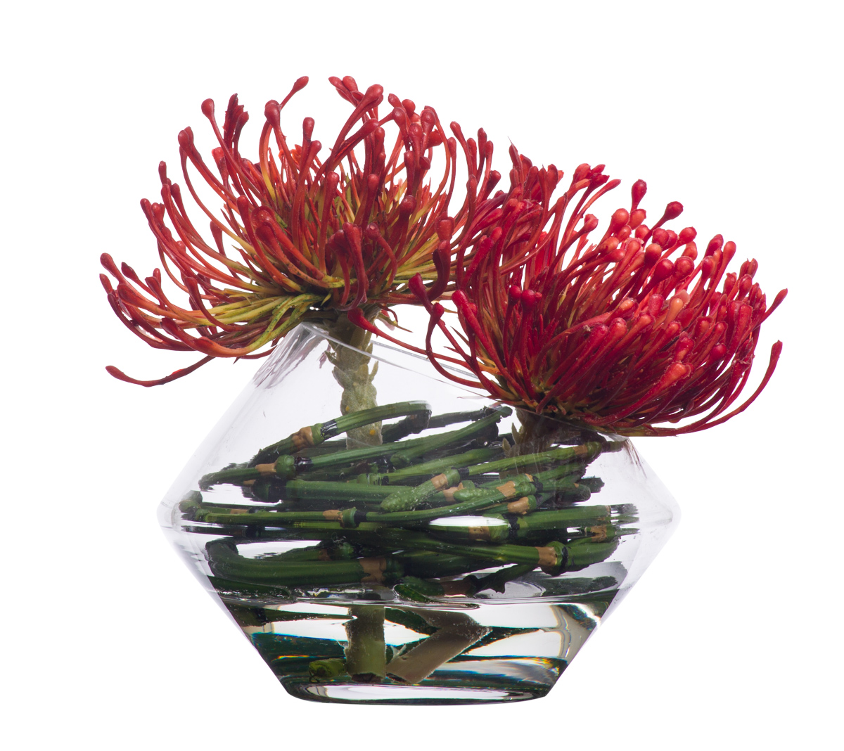 Small Pincushion Waterlike