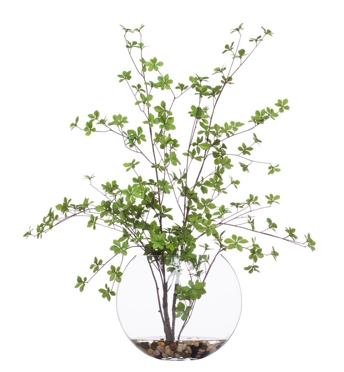 Dodan Tree in Glass Oval Vase