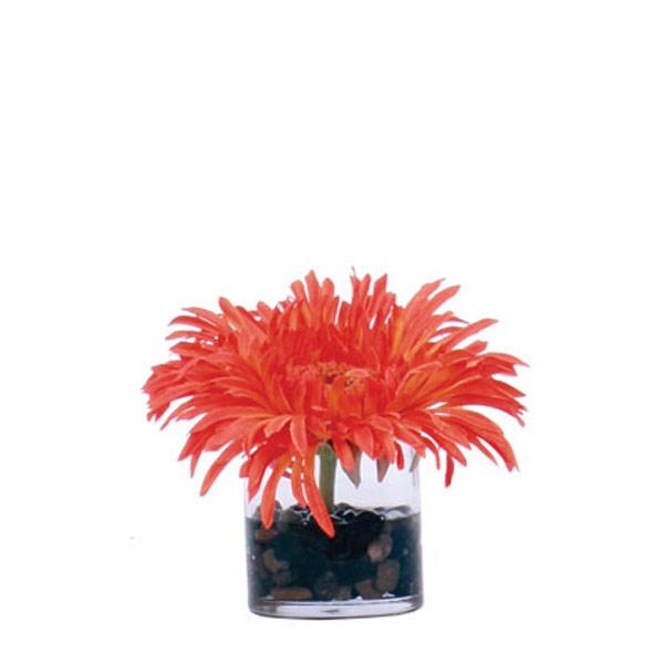 Orange Gerber Waterlike