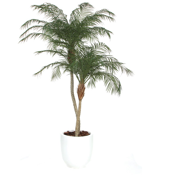 Deluxe Phoenix Palm in a Basket