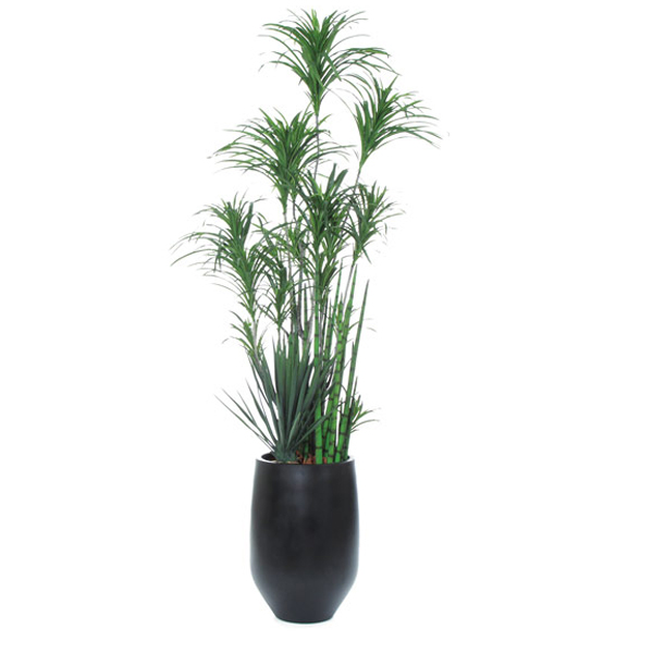 Dracena/Snake Plant in Black Container