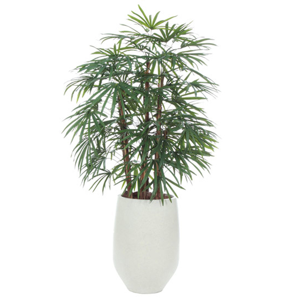 6-ft. Raphis Palm in White Container