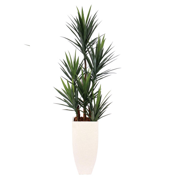 Yucca in a Tall White Terrazo Square Pot