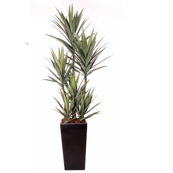( OUT OF STOCK. ETA JUNE 2019 ) Double Yucca in a Tall Black Square Resin