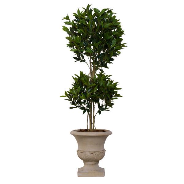Laurel Topiary in Basket