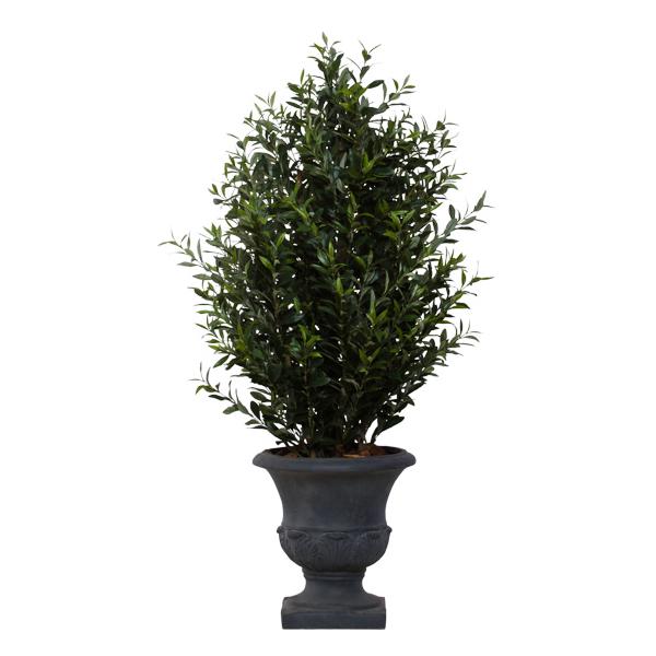 Olive Bush in Grey Classic Urn