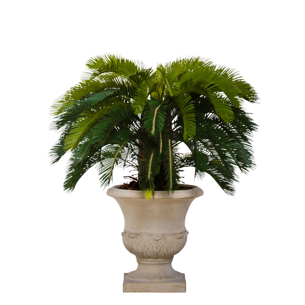 Cycas Topiary in Beign Classic Urn