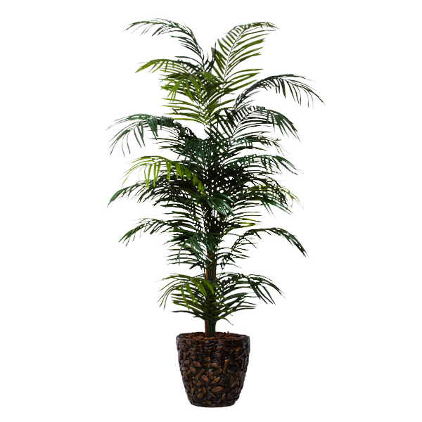 Areca Palm in Basket