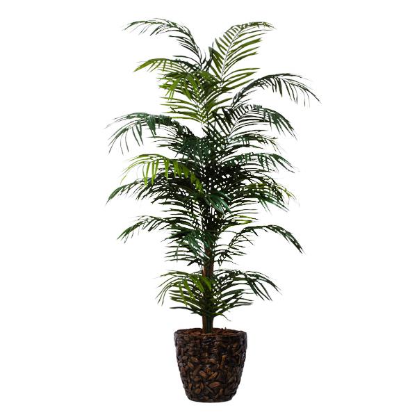 Areca Palm in Basket