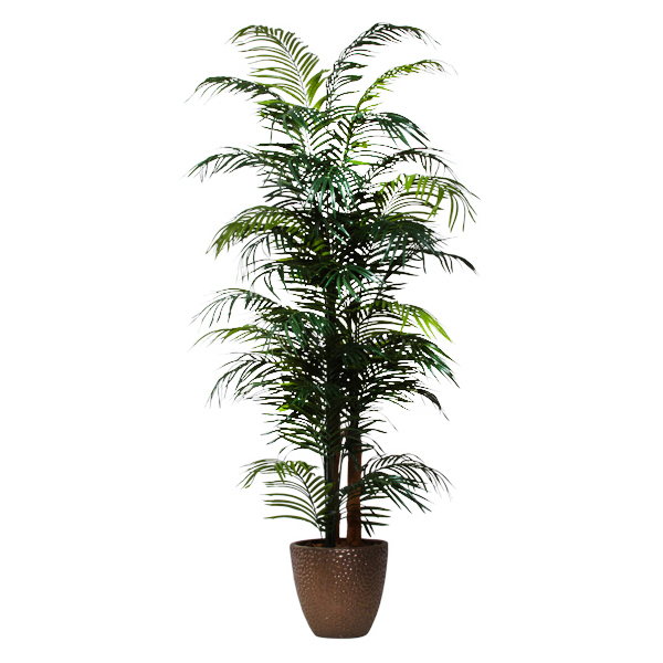 7.5-ft. Areca Palm in Basket