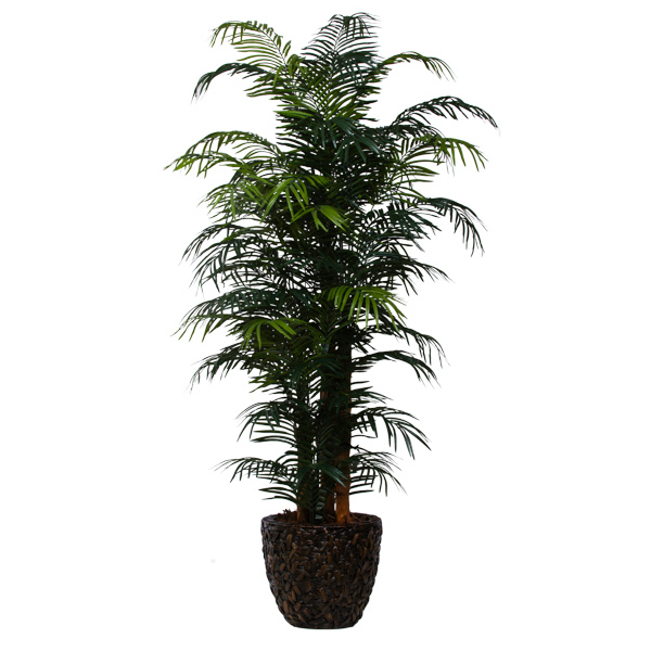9-ft. Skinny Areca Palm in Basket