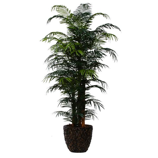 9-ft. Skinny Areca Palm in Basket