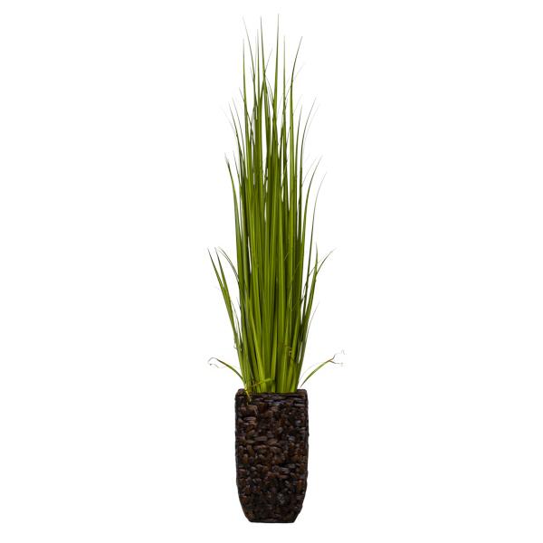 Gladiolus Grass in Bac-Bac