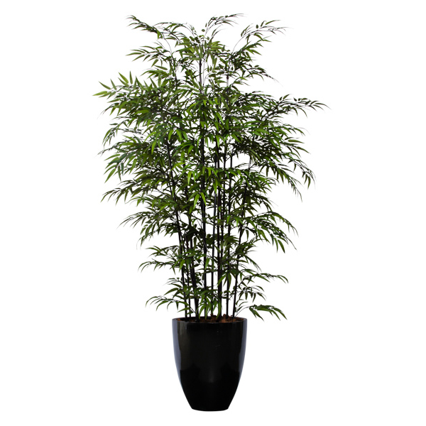 8-ft. Double Black Bamboo in Shiny Black Pot