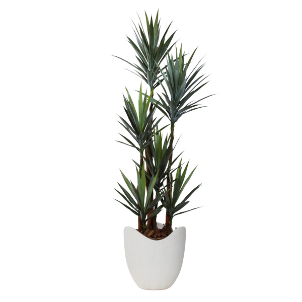 Deluxe Yucca in Basket